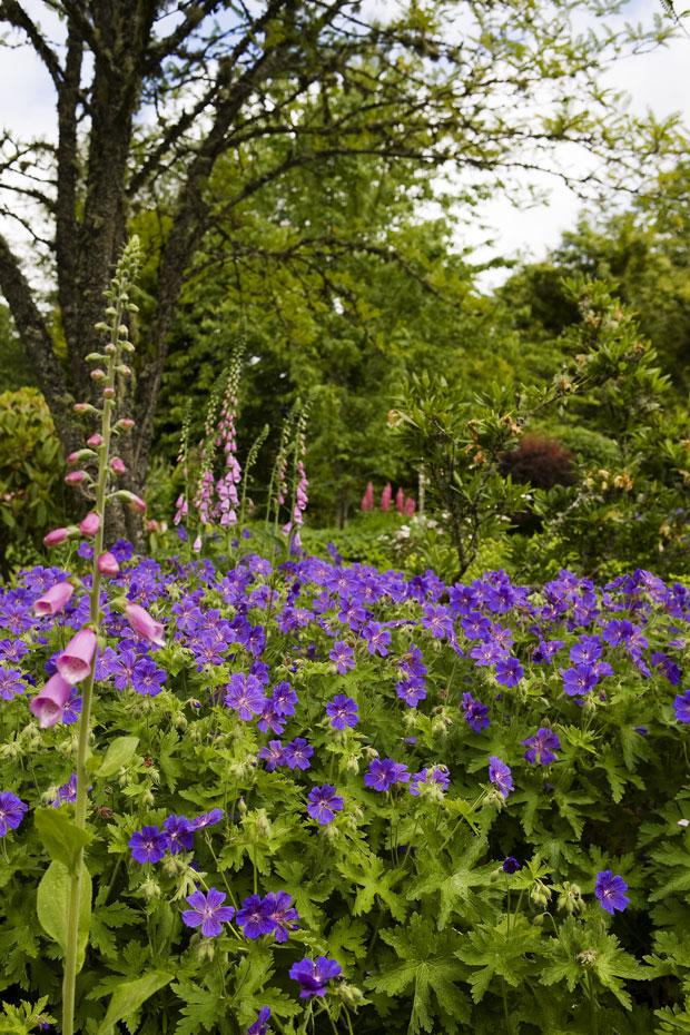 Kilbryde Castle Gardens Main 10