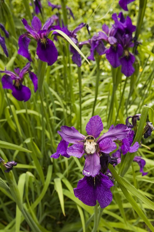 Kilbryde Castle Gardens Main 6